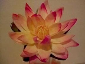 Asian Relaxation Healer
